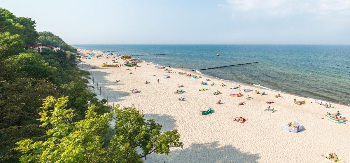 Plaża nad morzem Bałtyckim, jasny piasek las